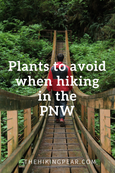 Plants to avoid when hiking the PNW